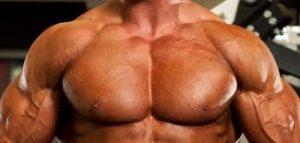 grandes músculos pectorales