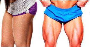 músculos de las piernas