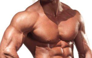 músculos del hombro