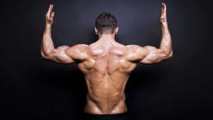 trapecio y los tríceps